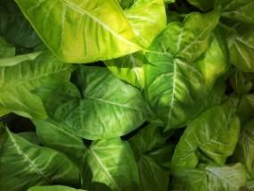 Środki ochrony roślin uprawnych