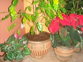 Donice oraz wazy Ceramiczne