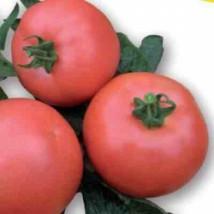 Pomidor Vp1 1000n