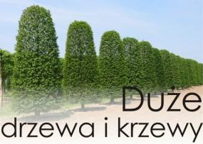 Duże drzewa i krzewy. Na gwarancji.